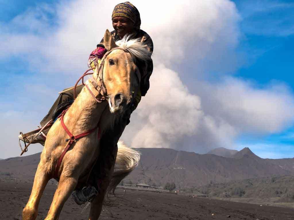 Sewa Kuda Bromo